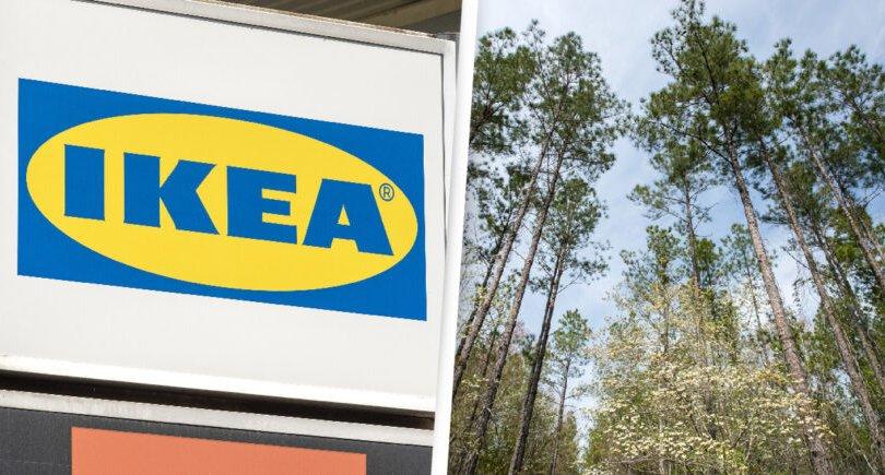 IKEA компани АНУ-д ой худалдан авч үйлдвэржилтээс хамгаалж байна