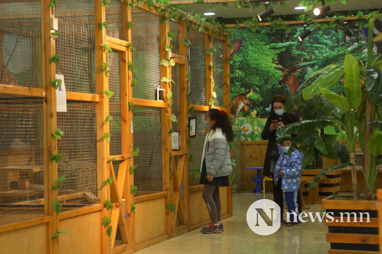 харилцааны зоопарк 33