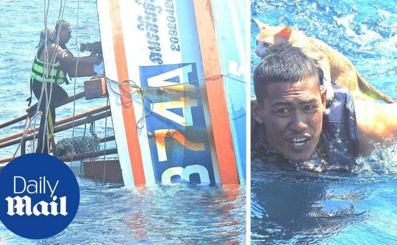 Баатарлаг далайчин живж буй усан онгоцноос дөрвөн муур аварчээ