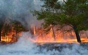 Булган аймагт гарсан ой хээрийн түймрийг унтраахаар ажиллаж байна