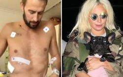 Лэйди Гагагийн нохой салхилуулагч  уушгиа тайруулжээ