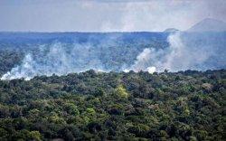 АНУ тэрбум доллар төлбөл Бразил ой устгахаа багасгана