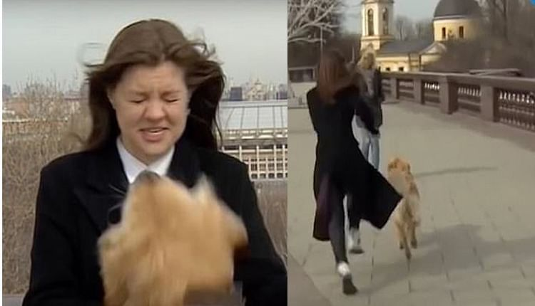 Видео: Шууд дамжуулалтын үеэр микрофоноо нохойд алджээ