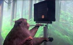 Тархиндаа чиптэй сармагчнаар компьютер тоглоом тоглуулав