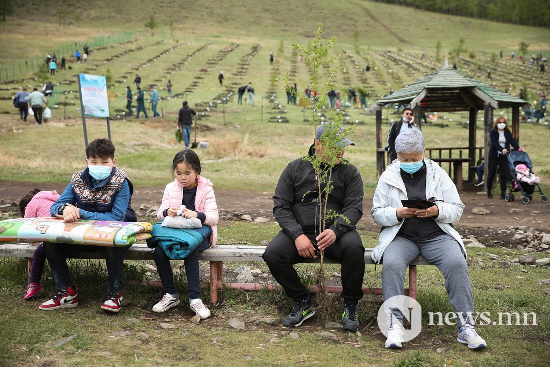 Богд ууланд мод тарилаа BRB (14)