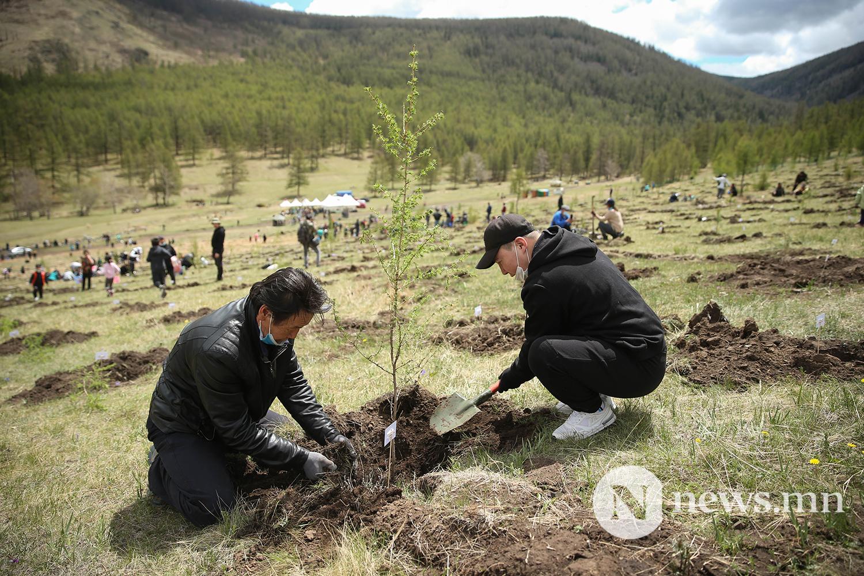 Богд ууланд мод тарилаа BRB (16)