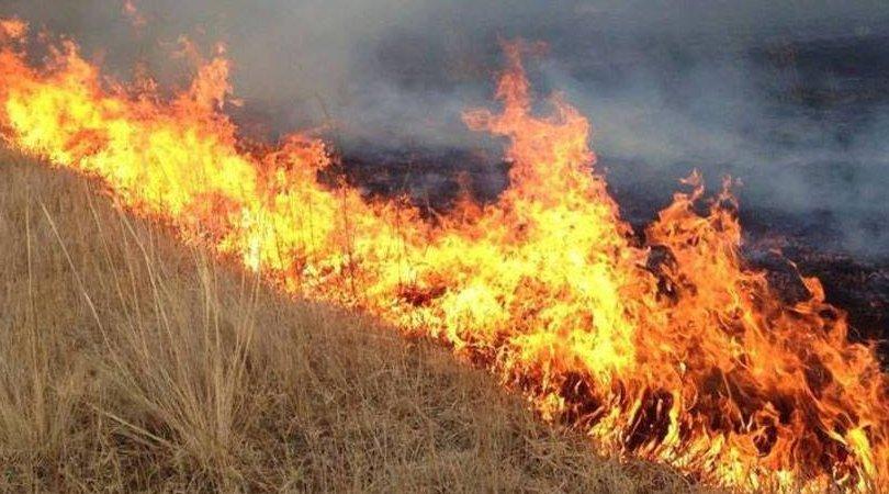 Дорнод аймагт хээрийн түймэрт 3500 га талбай шатжээ