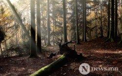 Хүн төрөлхтөн 2000 оноос хойш нийт 386 сая га ой мод устгажээ