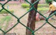 Амьтны хүрээлэнгээс гурван ирвэс оргосныг иргэдээс нуужээ