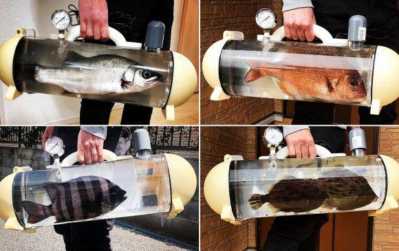 Япон: Аялалд явахдаа загасаа авч явах аквариум бүтээжээ