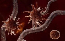 Хавдрыг өөрөөр нь устгуулдаг технологийг цар тахлын эсрэг ашиглана