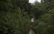 Сүүлийн 20 жилд Францын хэмжээтэй ой нөхөн сэргээжээ