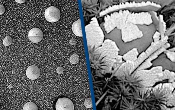 Ангарагаас олдсон гэх мөөгөнцөр лабораториос зөөвөрлөгдсөн үү?