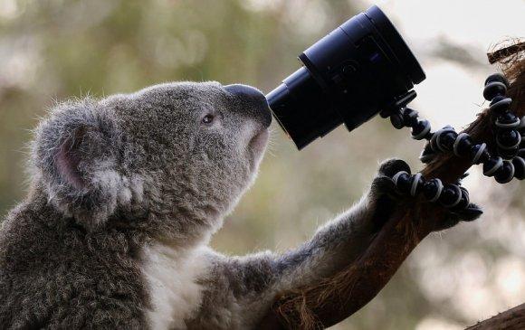 Австралийн замын камер уутат баавгайн царайг ялгаж танина