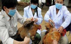 """""""H10N3"""" вирус хүнд халдсан анхны тохиолдол Хятадад бүртгэгдэв"""