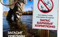 Загасыг үржлийн үед нь агнахгүй байя!