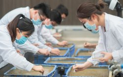 Хятад сансрын будааныхаа анхны ургацыг хураалаа