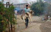 Турк хоёр хоногт 53 ойн түймэр гарсан шалтгааныг шалгаж байна