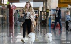 АНУ 113 орноос нохой импортлохыг хориглолоо