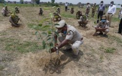 Энэтхэгчүүд 250 сая мод тарьж байна