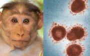 АНУ, Хятадад сармагчнаас хүнд халддаг өвчин бүртгэгдэв