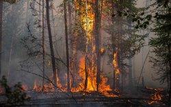 Ойн түймэр улсын хилээс 850 км зайд асаж байна