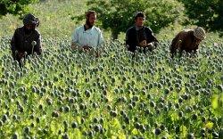 """Афганчууд """"амин зуулга""""-аасаа салах уу?"""
