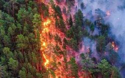 Сэрэмжлүүлэг: Монголд нийт 122.6 га талбай түймэрт өртжээ