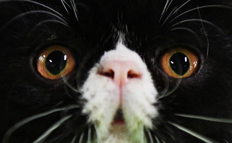 ОХУ-ын амьтдын царай таних сүлжээ 84-94 хувь үнэн ажиллаж байна