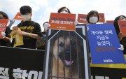 Өмнөд Солонгост нохойн мах идэхийг хориглоно
