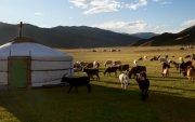 """Монголд малын халдварт өвчин гарсан талаар """"Xinhua"""" мэдээлэв"""