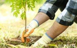 """""""Тэрбум мод"""" үндэсний хөдөлгөөнд 320 орчим ААН, байгууллага нэгджээ"""