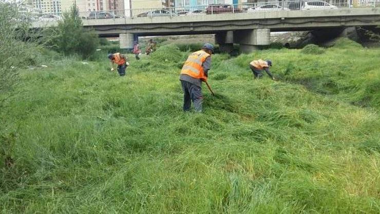 319.915 м.кв талбайн хөл газрын ургамлыг цэвэрлэв