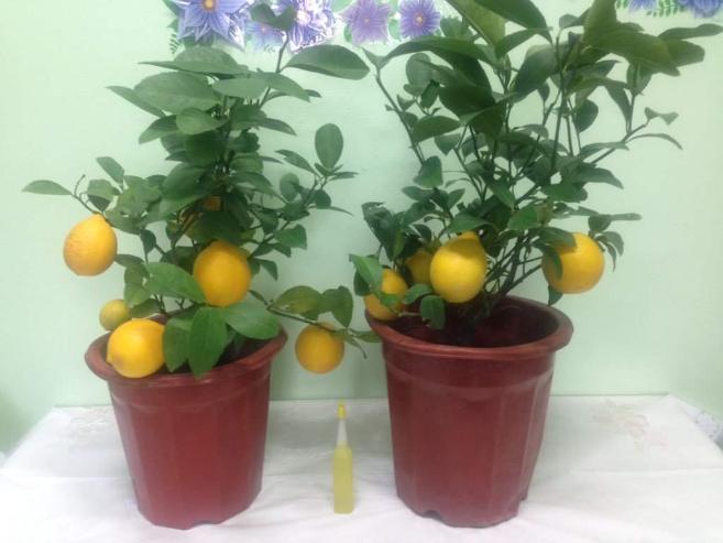 Лимоноор дамжин бөөс орж ирж байгааг анхааруулав