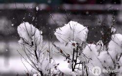 Улаанбаатарт цас орж, шуурна