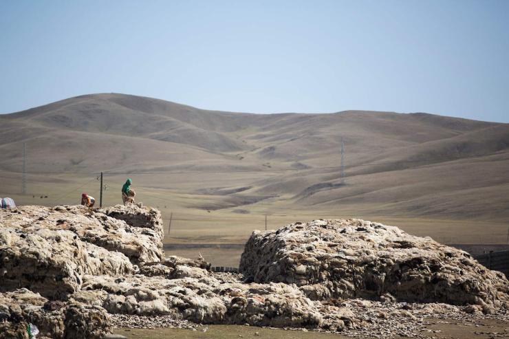 Говь-Алтай аймагт ноолуур хамгийн өндөр үнэтэй байна