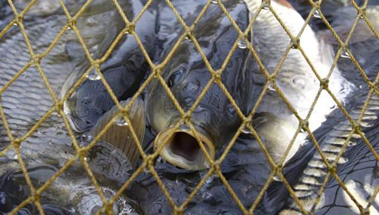 Загасны үнэ нэмэгдэнэ