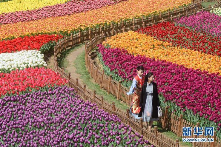 30 сая алтанзул дэлбээлжээ