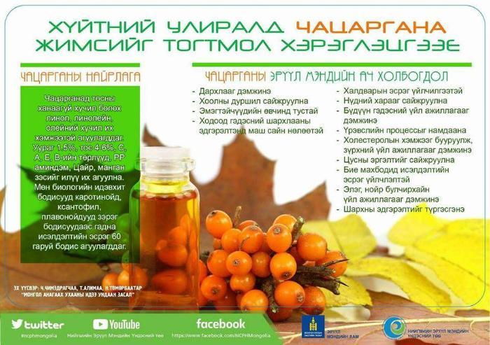 Чацаргана жимсний эрүүл мэндийн ач тус
