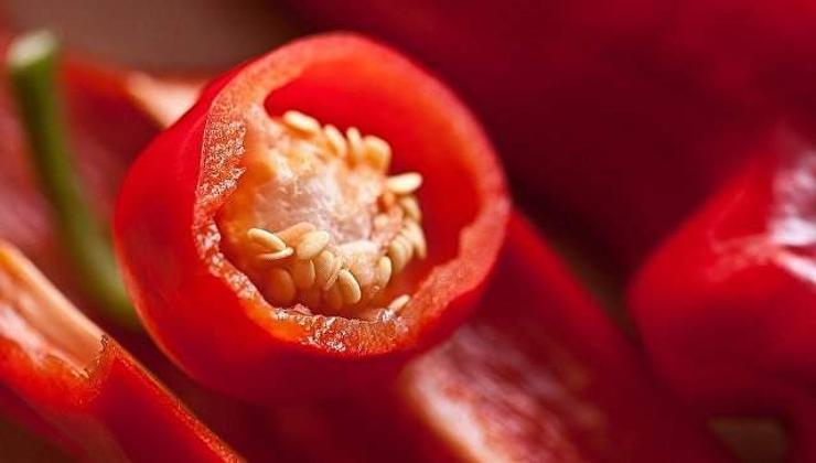Сибирийн эрдэмтэд шинэ сортын чинжүү, улаан лооль гаргажээ