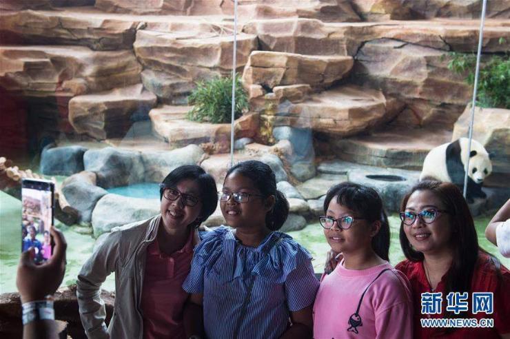 Хятадын панда Индонезид суурьшжээ