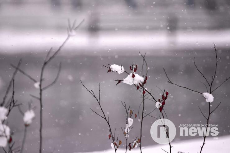Маргаашнаас цас орно