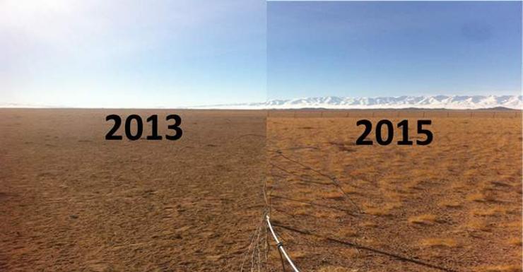 """""""Нийтийн өмчийн эмгэнэл"""" буюу Монгол нутгийг нөмөрсөн бэлчээрийн талхагдал"""