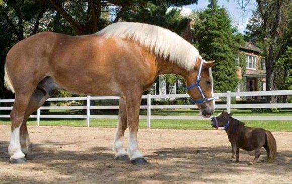 Хамгийн жижиг бас том морь Биг Жэк болон Тумбелинатай танилц