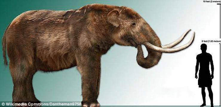 Дэлхий дээр үхэрнээс том амьтан үлдэхгүй гэв