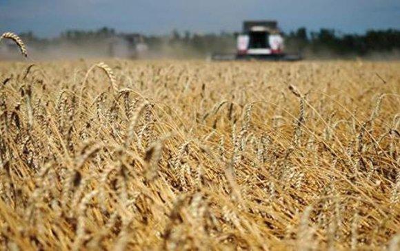 2030 он гэхэд ОХУ үр тариа, төмсний үйлдвэрлэлээ хоёр дахин нэмэгдүүлнэ