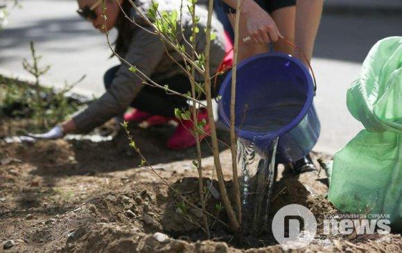 20 гаруй байгууллага 500 орчим мод тарьжээ